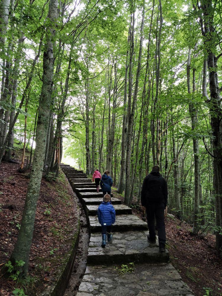 Prilaz planinskoj kuci na Donjim barama
