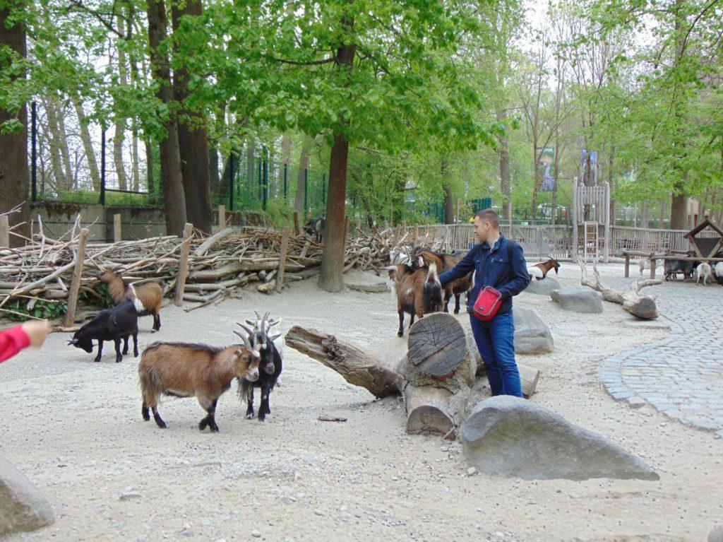 Koze u Hellabrunn