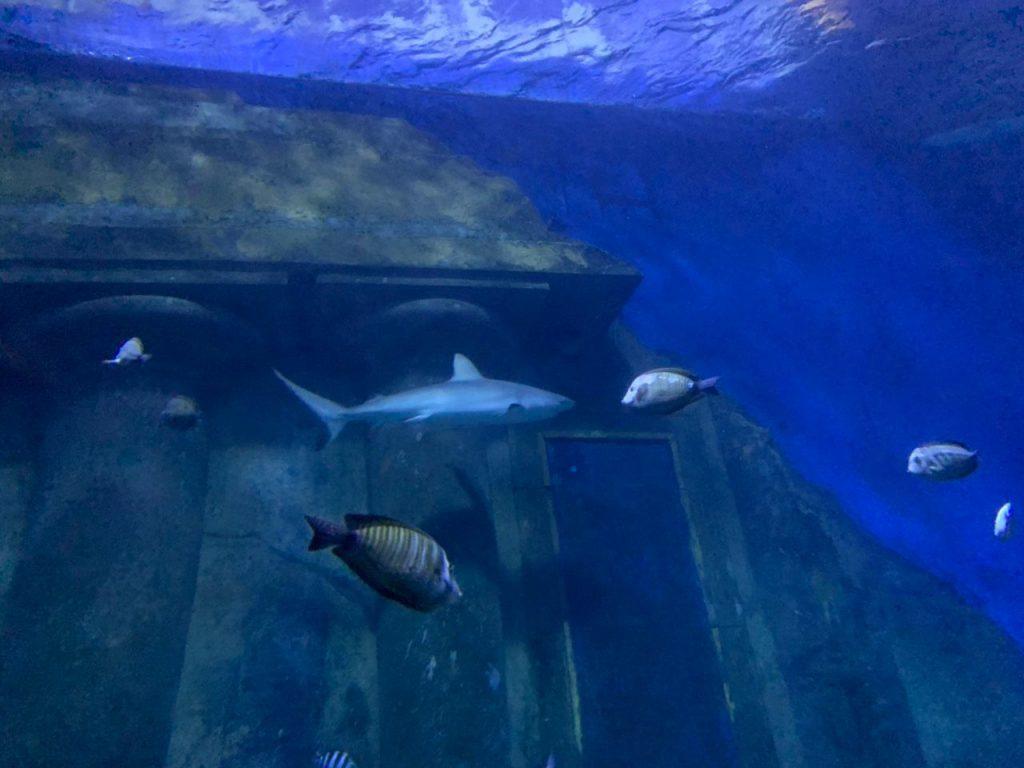 Akvarijum u Sea life