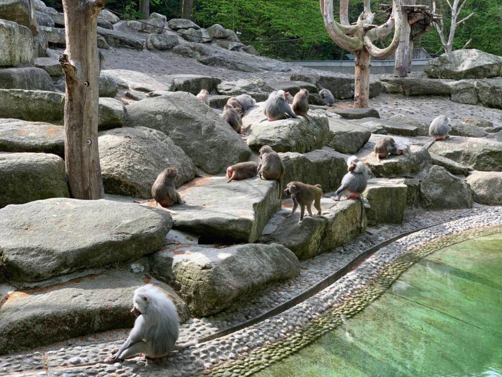 Majmuni u Hellabrunn