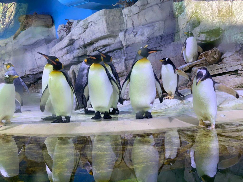 Pingvini u Hellabrunnu