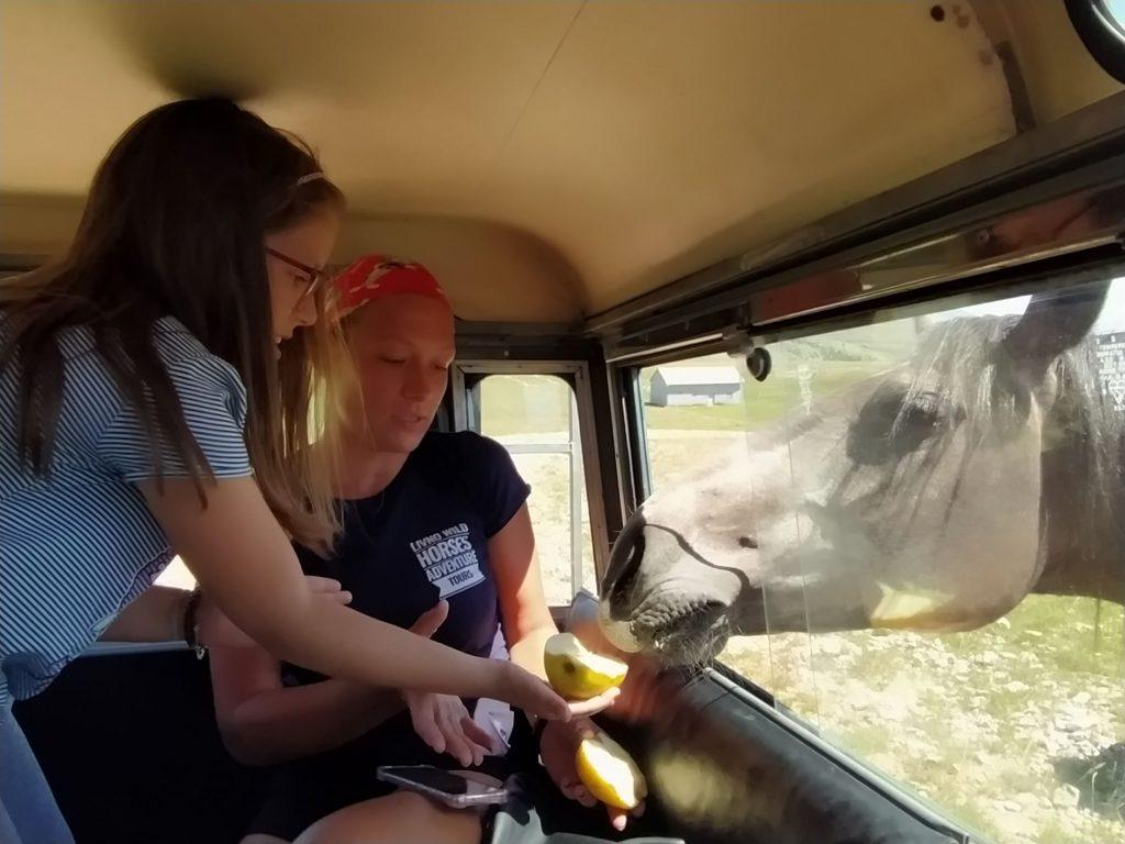 Hranjenje divljih konja sa Kruga
