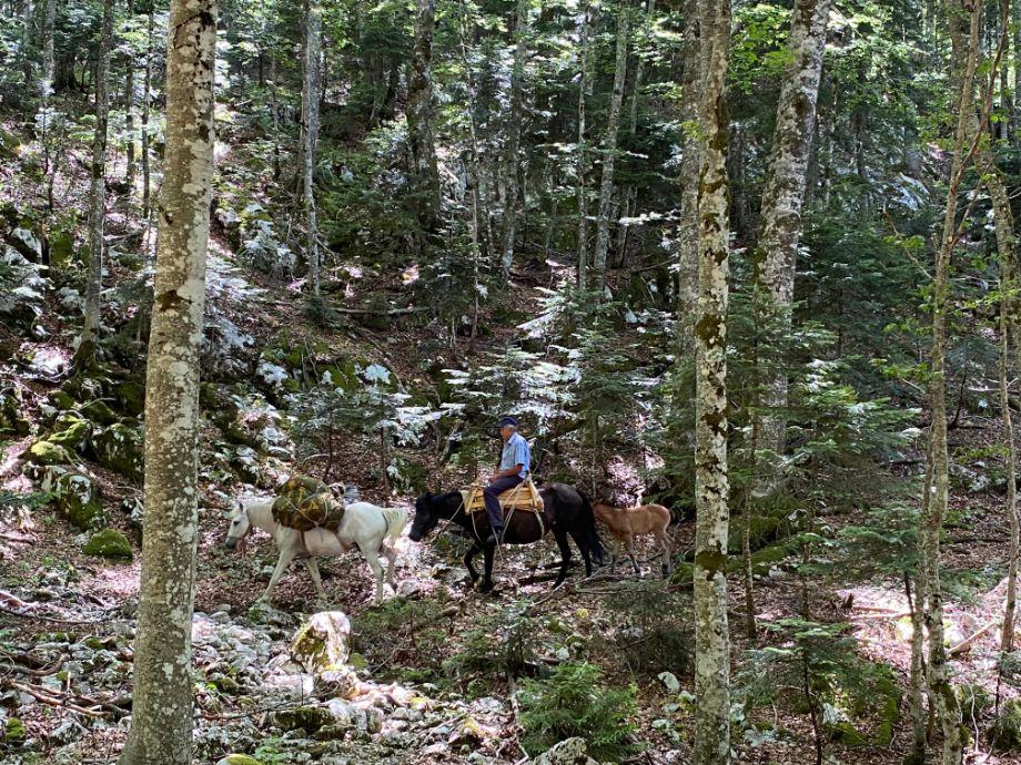 Konji za prevoz do Trnovackog jezera