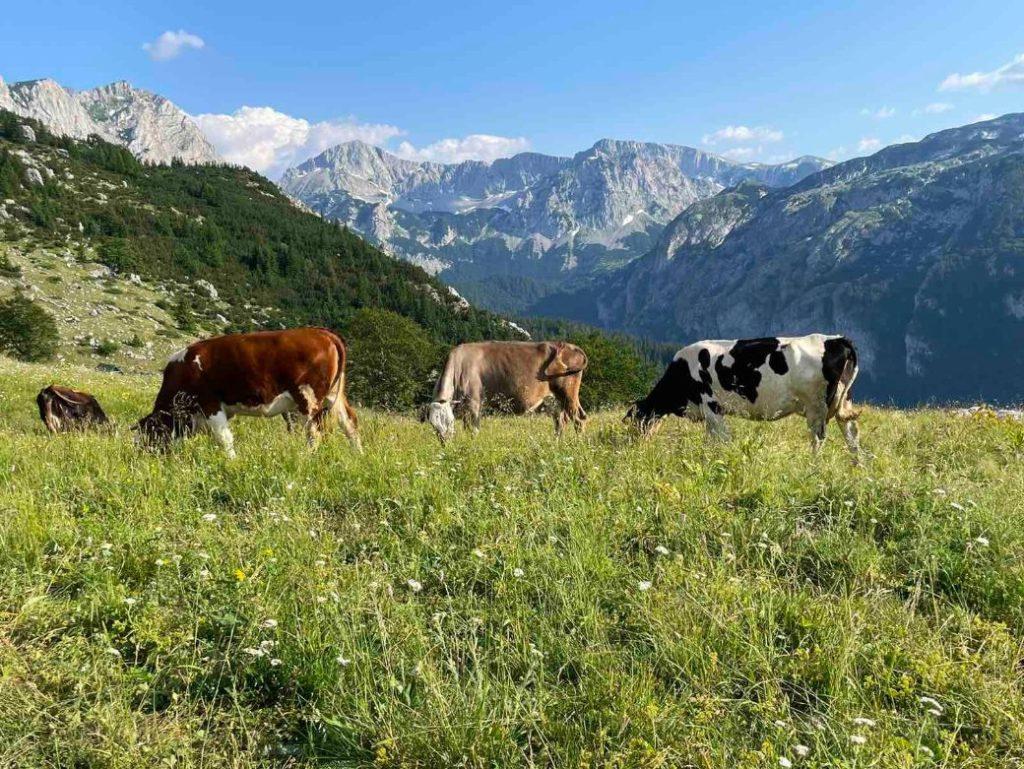 planina Maglic visoravan Prijevor