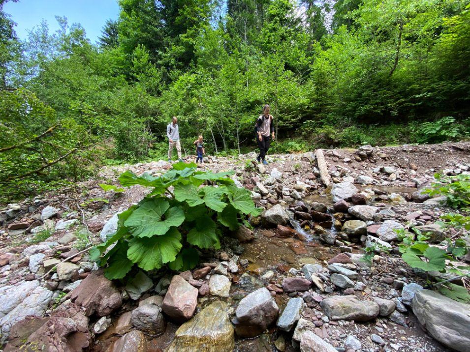 potok Perucica u NP Sutjeska