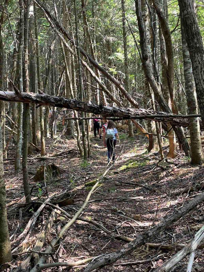 ogoljela stabla prašume Perućica