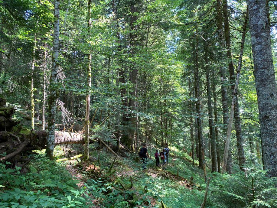 staza kroz prašumu Perućicu