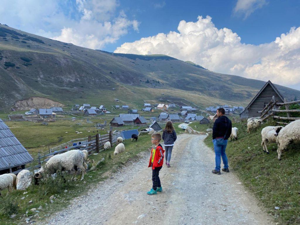 Ovce na prokoskom jezeru